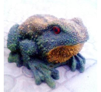 Лягушка ропуха